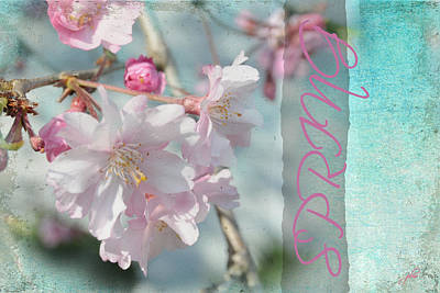Photograph - Memories Of Spring by Paulette B Wright