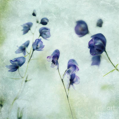 Floral Photograph - Memories Of Spring by Priska Wettstein