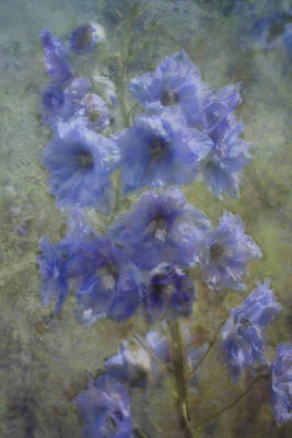 Photograph - Memories Of Summer - Painterly by Ellen Heaverlo