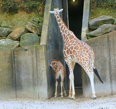 Art Print featuring the photograph Memphis Girraffe by Shirley Moravec