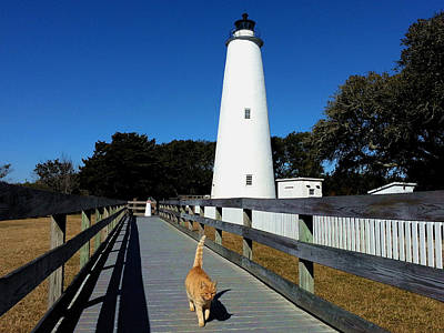 Ocracoke Lighthouse Photograph - Meow by Karen Rhodes