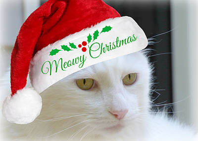 Photograph - Meowy Christmas by Jean Wright