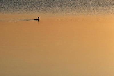 Merganser Wall Art - Photograph - Merganser Duck, Cape Cod, Ma Usa by Jose Azel