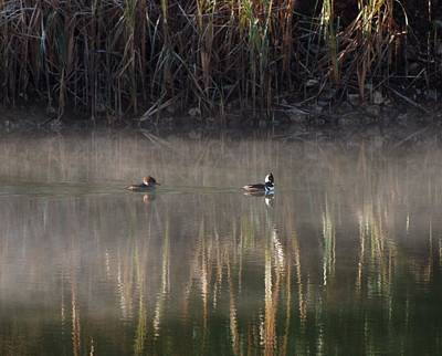 Photograph - Merganser Reflections by Amy Porter