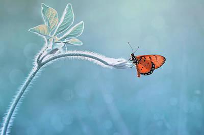 Wings Photograph - Merindukanmu by Edy Pamungkas