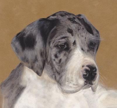Merle Great Dane Puppy Art Print by Loreen Pantaleone