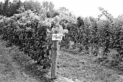 Grape Vine Photograph - Merlot by Scott Pellegrin