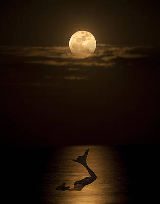 Photograph - Mermaid's Moonsong by Paula Porterfield-Izzo