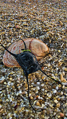 Photograph - Mermaids Purse by Heather Applegate
