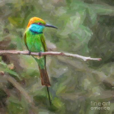 Digital Art - Merops Orientalis Little Green  Bee-eater by Liz Leyden