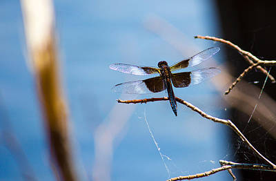 Photograph - Merrill Creek Dragonfly by Jorge Perez - BlueBeardImagery