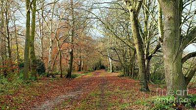 Merrions Wood In Autumn Original by John Chatterley