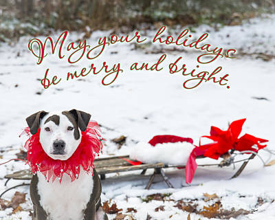Photograph - Merry And Bright by Alana Ranney
