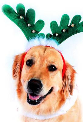 Digital Art - Merry Christmas 4 by Kara  Stewart