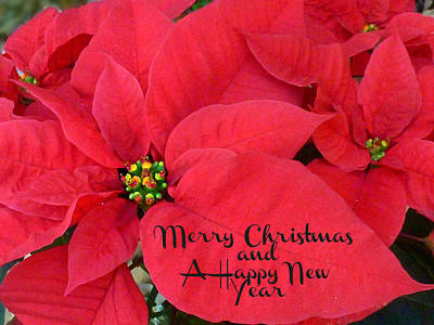Photograph - Merry Christmas And Happy New Year - Christmas Poinsettia by William Tanneberger