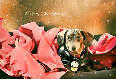 Photograph - Merry Christmas by Barbara Manis