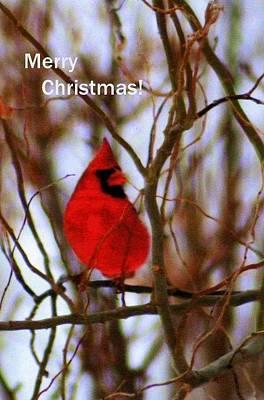 Digital Art - Merry Christmas Cardinal by Kay Novy