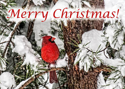 Photograph - Merry Christmas Cardinal by Lara Ellis