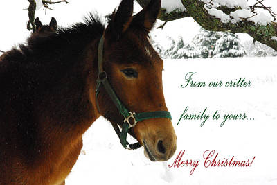 Photograph - Merry Christmas Critters Donkey Mule by Robyn Stacey