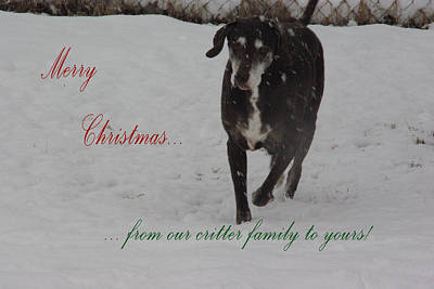 Photograph - Merry Christmas Critters Hershey by Robyn Stacey