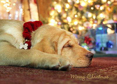 Lab Dog Digital Art - Merry Christmas From Lily by Lori Deiter