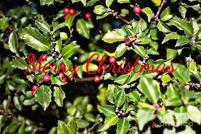 Photograph - Merry Christmas Greeting Card by Judy Palkimas