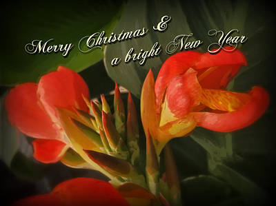 Canna Photograph - Merry Christmas Happy New Year Card - Red Canna Lily by Mother Nature