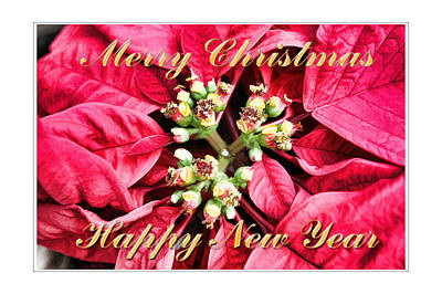 Digital Art - Merry Christmas Poinsettia Card by Audreen Gieger