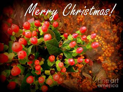 Photograph - Merry Christmas - Red Berries Holiday And Christmas Card by Miriam Danar