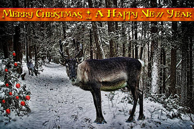 Photograph - Merry Christmas Reindeer by Chris Lord