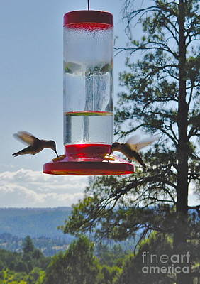 Photograph - Mesa Verde Hummingbirds Feeding by Joan McArthur
