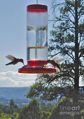 Photograph - Mesa Verde Hummingbirds Feeding by Joan McArthur