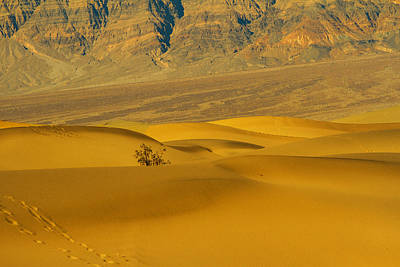 Photograph - Mesquite Dunes by Kunal Mehra