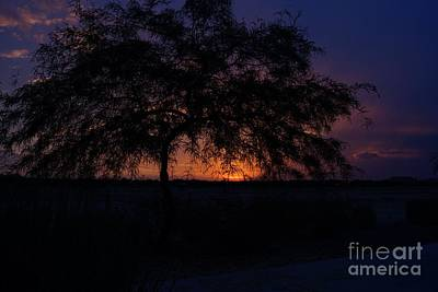 Photograph - Mesquite Sunset by Kerri Mortenson