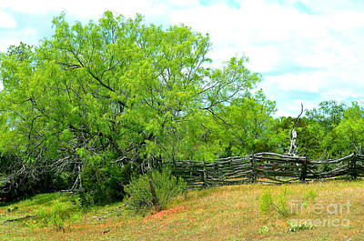 Mesquite Tree And Cedar Post Fence Art Print by Linda Cox