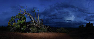 Mesquite Tree Photograph - Mesquite Tree In Stormy Weather by Raul Touzon