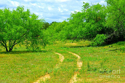 Photograph - Mesquites And Pickup Truck Tracks by Linda Cox