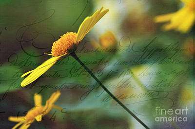 Digital Art - Message In A Daisy by Kaye Menner