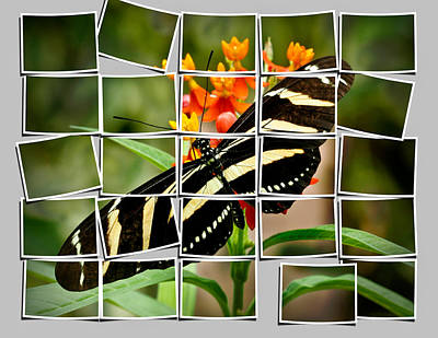 Manipulation Photograph - Messed Up Butterfly by Jean Noren