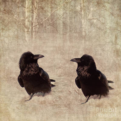 Black Birds Photograph - Messenger by Priska Wettstein
