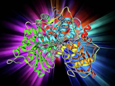Molecular Structure Photograph - Metabolic Enzyme Molecule by Laguna Design