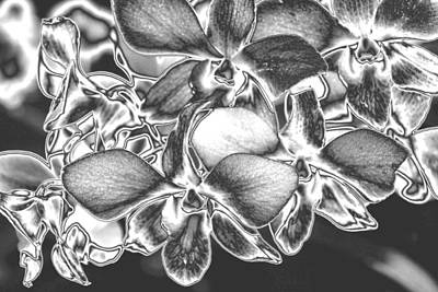 Absract Photograph - Metalised Orchid Flowers by Carole-Anne Fooks