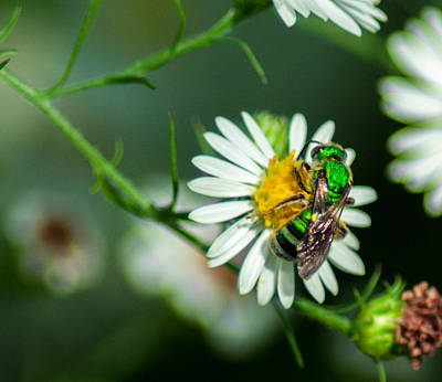 Pollinate Digital Art - Metallic Green Sweat Bee by Optical Playground By MP Ray