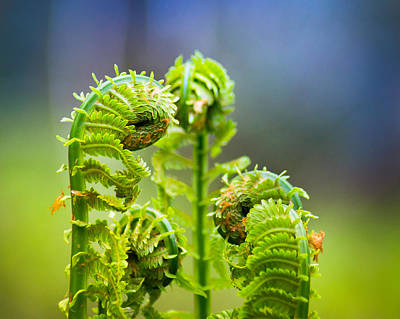 Photograph - Meting Of The Ferns by Bill Pevlor