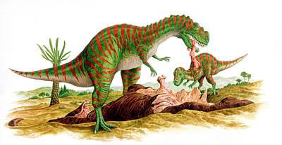 Carcass Photograph - Metriacanthosaurus Dinosaurs by Deagostini/uig