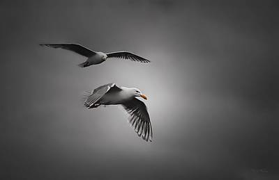 Photograph - Mew Gulls Of Alaska by Dyle   Warren