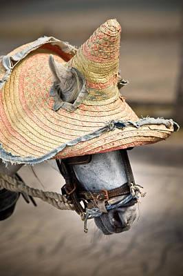 Photograph - Mexican Burro by John Magyar Photography