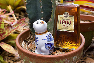 Tequila Photograph - Mexican Cat Tableau 2 by William Patrick
