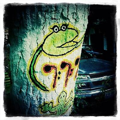 Reptiles Photograph - Mexican Graffiti Tree Art (puerto by Natasha Marco