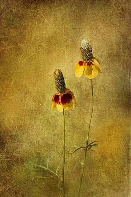 Cone Flower Photograph - Mexican Hat Dance by David and Carol Kelly